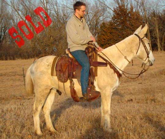 Buckshot-Sold