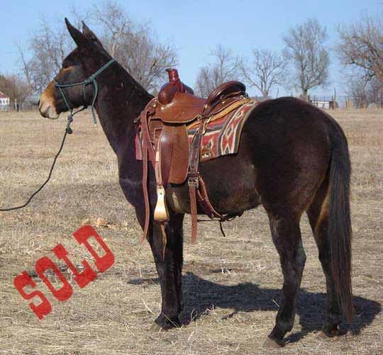 Cutter-Sold