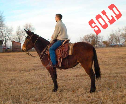 Harly-Sold