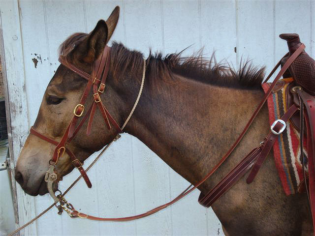 Jones Mule Saddle & Tack - Headstall, Caveson & LoopRein
