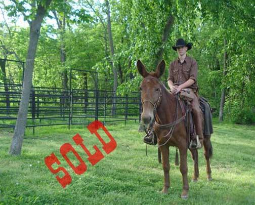 Jodie-Sold