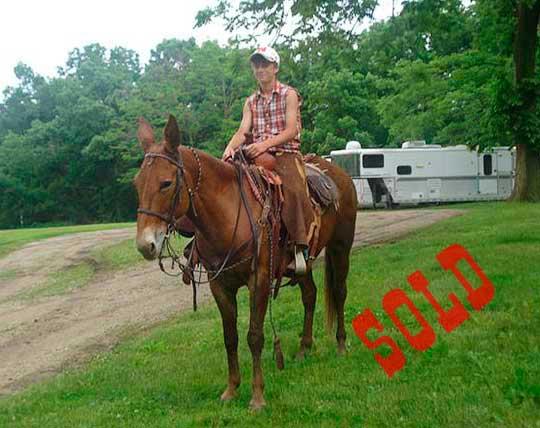 Jordy-Sold