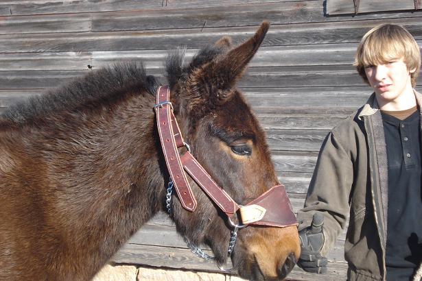 Jones Mule Saddle & Tack - Pack Halter