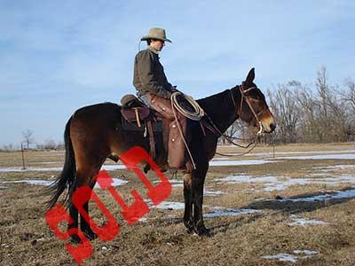 Pecos-Sold
